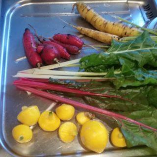 Selvdyrkede grønnsaker